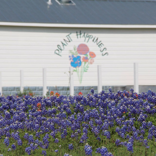 Bluebonnets behind our guest house! masterofhort countryliving brenham bluebonnets texasnativehellip