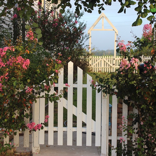 Love my yard in the fall!  #masterofhort #crepemyrtle #countryliving #picketfence