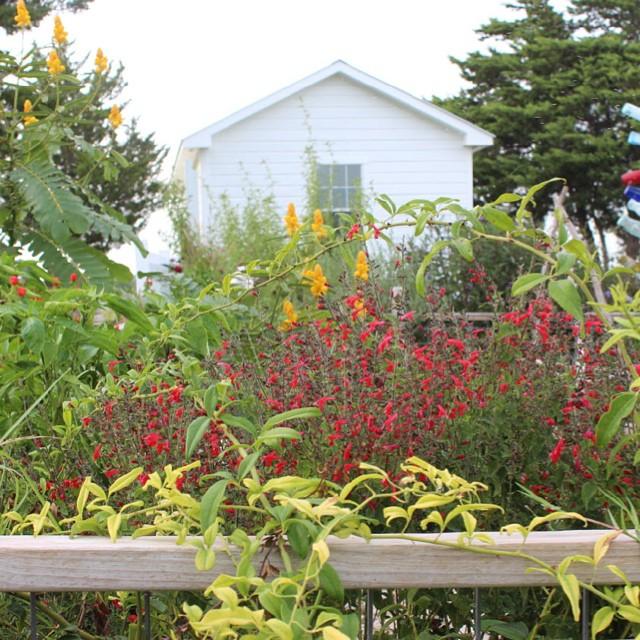 My little kitchen garden in the fall #masterofhort #texasforever #organicflowers #organicgardening #potager