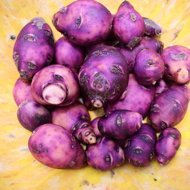Organic blue fingerling potatoes in a yellow Texas Ware bowl #masterofhort #organic #potato #organicgardening