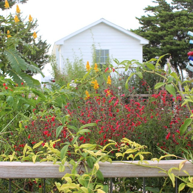 My little kitchen garden in the fall #masterofhort #texasforever #organicflowers #organicgardening #potager