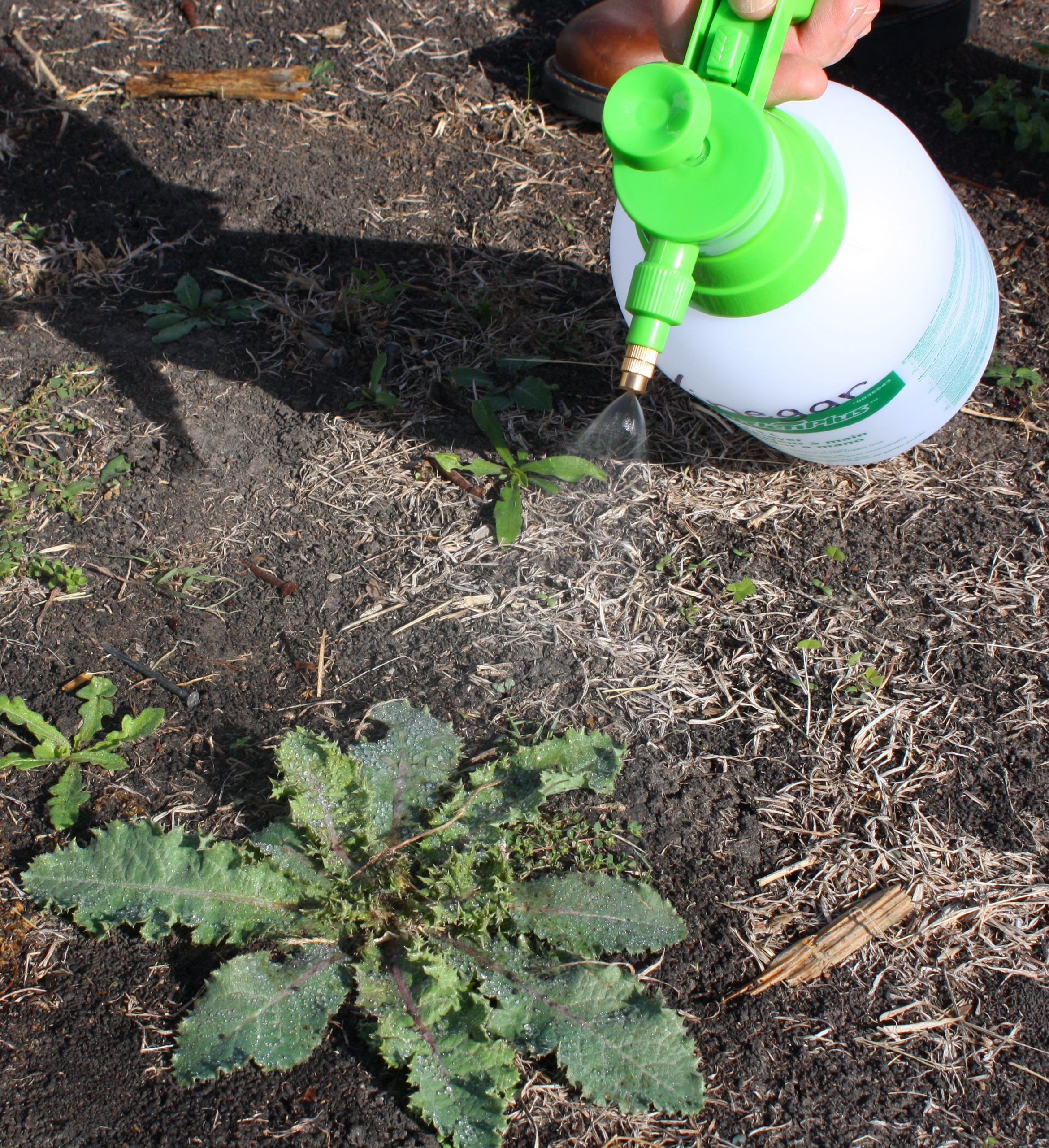 Spraying weeds in flower beds - When Mixing Herbicides Or Pesticides Mix Only What You Need And Clearly Mark Each Container