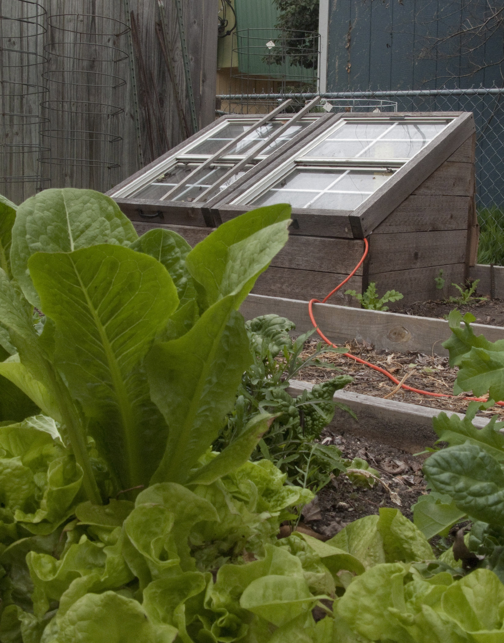 Weeds in flower beds with potato like roots - Cold Frame In Cabluck Back Yard Garden Saturday March 7 2015 In Austin Texas Photo Harry Cabluck