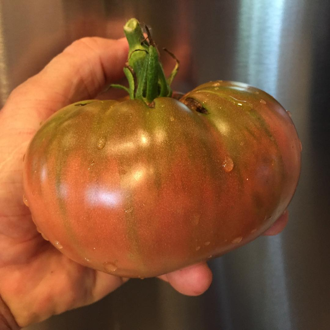 First big heirloomtomato of the season! Black Russian variety Veryhellip